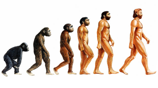Is there a scientific proof of evolution?
